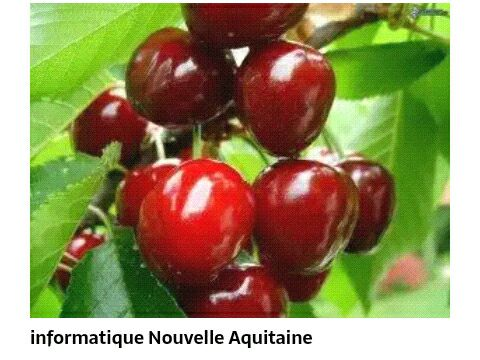 Referencement sur Google - pic contains cherries and leaves